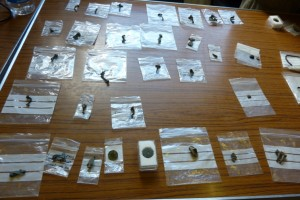 Archaeological finds from Marton